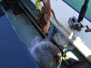 タコ釣り 洗濯ネット